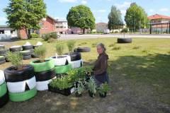 Dela trädgårds växtdonationer.