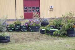 Dela trädgård uppvuxen trädgård, september.